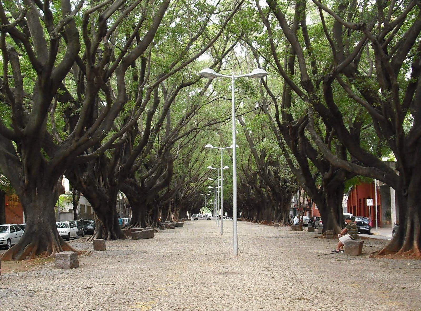 avenida-bernardo-monteiro
